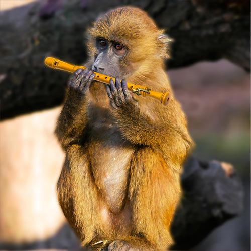 hangszer-vagy-allat